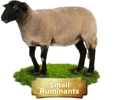 small ruminant products